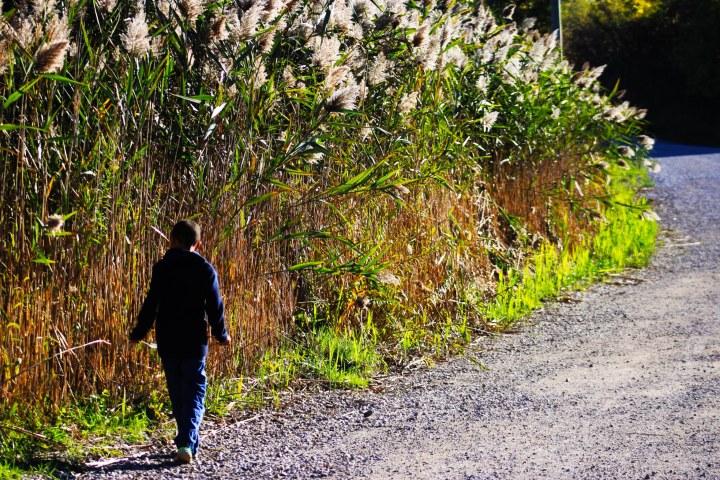 a boy walkd among reeds
